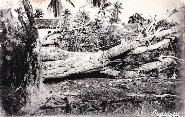 5-ต้นไม้ใหญ่ยังโคนล้มเมื่อโดนลมพายุ copy