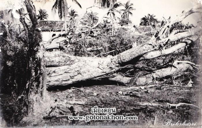 5-ต้นไม้ใหญ่ยังโคนล้มเมื่อโดนลมพายุ